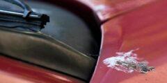 تزال فورا.. خبراء يحذرون من فضلات الحشرات على السيارة في الصيف
